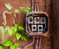 Fusibles en céramique dans la vieille boîte électrique et le lierre vert Image libre de droits