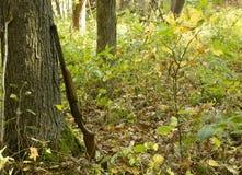 Fusil de chasse dans l'automne Photos stock
