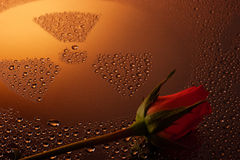 Fusion materials. Radioactivity sign from water drops and rose flower as abstract background stock photos