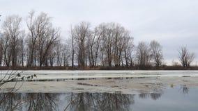 Fusione del ghiaccio ultimo sul fiume in molla in anticipo di un giorno nuvoloso Inondazione sul fiume stock footage