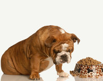 Fussy dog with food Royalty Free Stock Photos