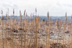 Fustighi nella priorità alta del campo, ambiente naturale Immagine Stock Libera da Diritti