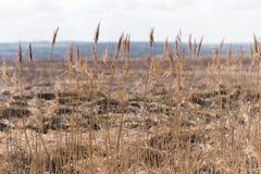 Fustighi nella priorità alta del campo, ambiente naturale Immagine Stock