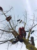 Futbol inicjuje drzewa Zdjęcia Royalty Free