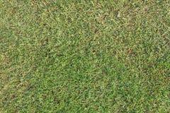 Futbolowy trawy tło Obrazy Stock