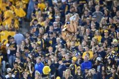 2014 futebol do NCAA - WVU-Oklahoma Imagem de Stock