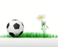 Futebol na grama Imagens de Stock