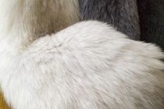 Futerko, biała naturar futerkowa tekstura fotografia stock