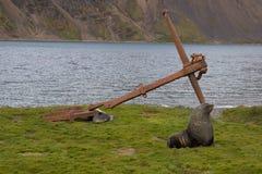 Futerkowa foka Sout Gruzja Fotografia Royalty Free