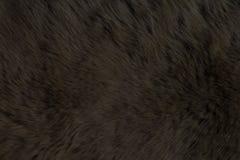 Futerkowego zwierzęcia tekstury, Niedźwiadkowy czerń Obraz Stock