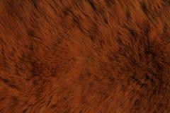 Futerkowego zwierzęcia tekstury, niedźwiedź Zdjęcia Stock