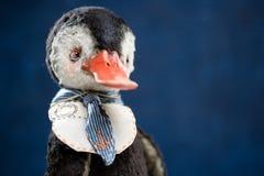 Futerkowej porcelany kaczki żeglarza krawata rocznika ptasia lala zdjęcia royalty free