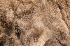 Futerkowej tekstury żubra stary włosy zdjęcie stock
