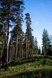 Futerkowi drzewa Obrazy Royalty Free