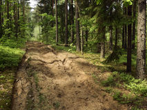 futerkowy drewna tnące piasku. Obraz Royalty Free