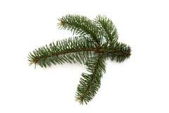 futerkowy drzewo Obraz Royalty Free