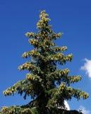 futerkowy drzewo Zdjęcie Royalty Free