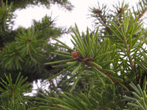futerkowy drzewo Fotografia Royalty Free