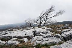 Futloos landschap van het winderige plateau stock foto's
