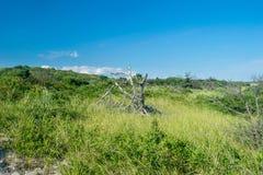 Futloze gebroken oude boom-stomp, amid weelderig groen gras, struiken en struiken op een mooie de zomerdag onder een duidelijk bl stock foto's