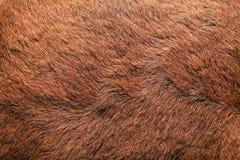 futro zwierzęce Zdjęcie Royalty Free