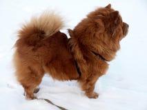 Futterfutterhund Lizenzfreies Stockfoto