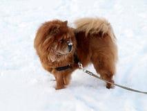 Futterfutterhund - Winterzeit Lizenzfreies Stockbild