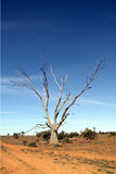 Future forêt tropicale Image libre de droits