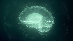 Futuristic blue digital brain seamless loop. Neurons firing in MRI scan