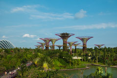 Futuristic Gardens in Singapore. Fabulous Supertrees in The Gardens by the Bay. One of the most attractive sight in Singapore Royalty Free Stock Photos
