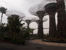 SuperTrees in Gardens by the Bay, Singapore stock photos