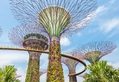 Futuristic super trees in the center of Singapore in Gardens by the Bay. Top bridge ocbc stock image
