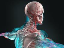Futuristisch lichaamsaftasten van mens stock foto's