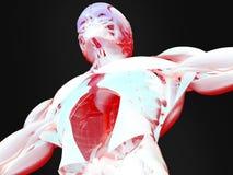 Futuristisk bildläsning av den mänskliga bröstkorgen Royaltyfri Foto