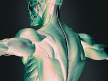 Futuristisk röntgenstråle av den mänskliga baksidan Royaltyfri Foto