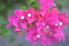 Futuro rosado de la flor imagenes de archivo