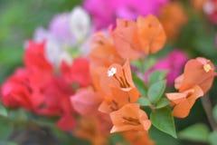 Futuro rosado de la flor fotografía de archivo libre de regalías