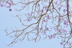 Futuro rosado de la flor fotos de archivo libres de regalías