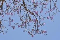 Futuro rosado de la flor foto de archivo