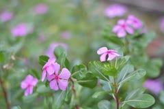 Futuro rosado de la flor imagen de archivo