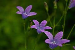 Fuuny flower royalty free stock image