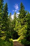 Fußweg durch dunklen Wald Lizenzfreies Stockbild