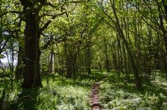 Fußweg in einem grünen Wald Lizenzfreie Stockbilder