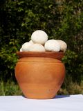 Fuzz balls. Fuzz balls in a clay pot Royalty Free Stock Photography