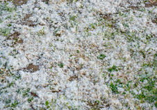 Fuzz on the ground outdoors. In Germany Royalty Free Stock Photos