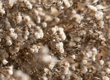 Fuzz on the plant outdoors in autumn Stock Image