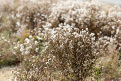 Fuzz on the plant outdoors in autumn.  Royalty Free Stock Images
