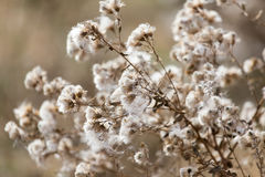 Fuzz on the plant outdoors in autumn Royalty Free Stock Photo