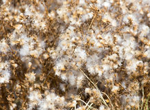 Fuzz on the plant outdoors in autumn.  Stock Photography