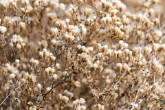 Fuzz on the plant outdoors in autumn.  Royalty Free Stock Photography